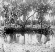 The Manatee Mineral Spring was thought to have healing powers. It was used by native Americans and settled by Manatee's first white pioneer, Josiah Gates, in January 1842. It served Fort Branch when the early settlers camped nearby for protection from the Seminole raid of 1856.